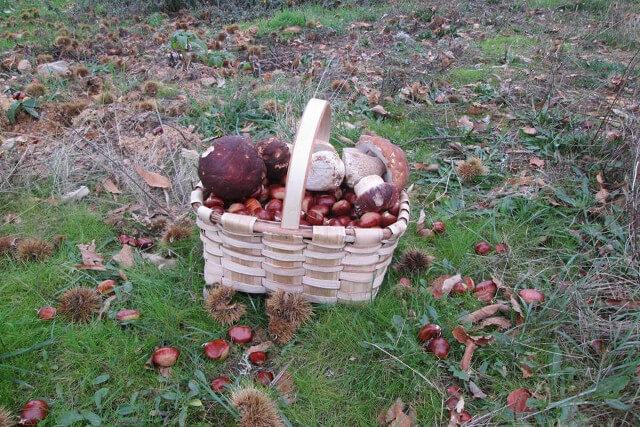 hongos-castañas-cesta