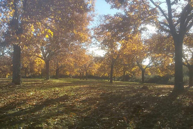 souto-otoño